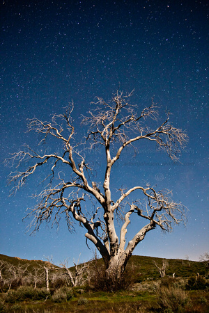 Star Tree in Blue I
